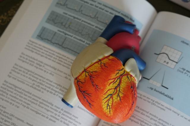 Daha Sağlıklı Bir Kalp Sizi Daha Akıllı Yapabilir