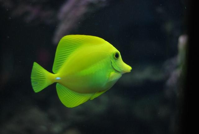 Balık Yağı Takviyeleri Depresyonla Mücadeleye Yardımcı Olabilir mi?