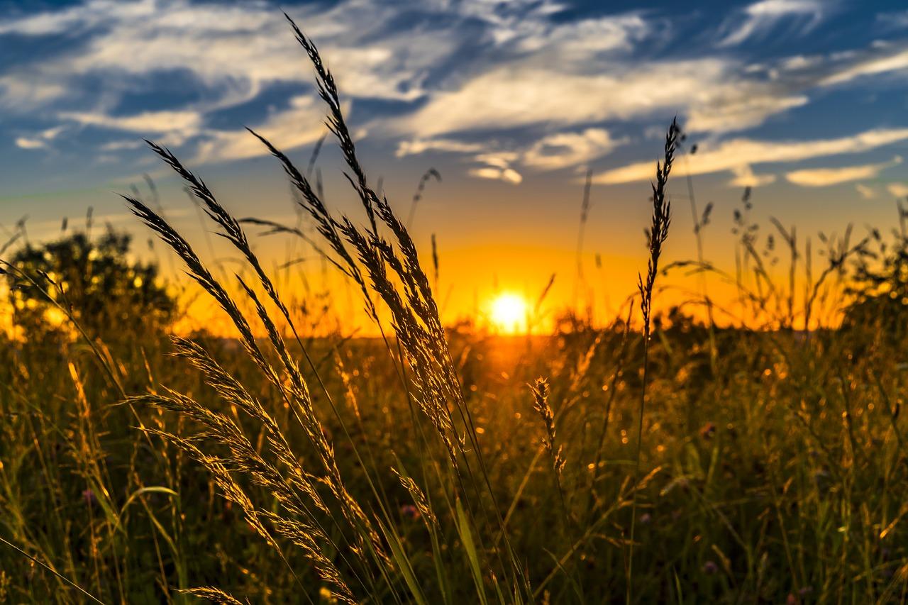Güneş Işığı Bağırsak Mikrobiyomunu Değiştiriyor Mu?